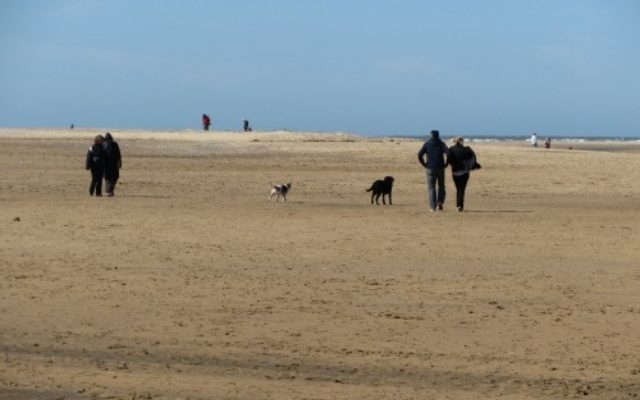 Wells next the sea Dog walk in Norfolk