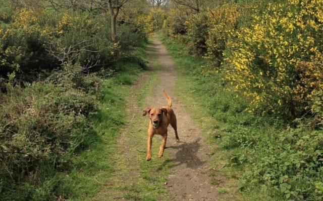 Wensum Way & Sparham Pools Dog walk in Norfolk