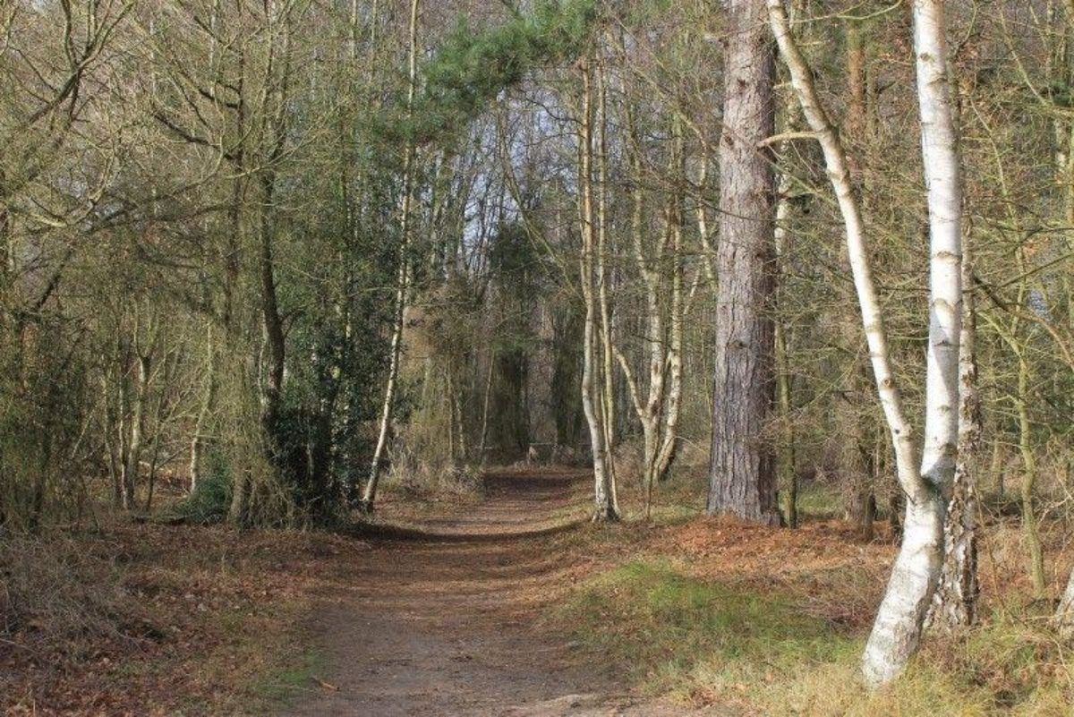 West Stow Forest large photo 1