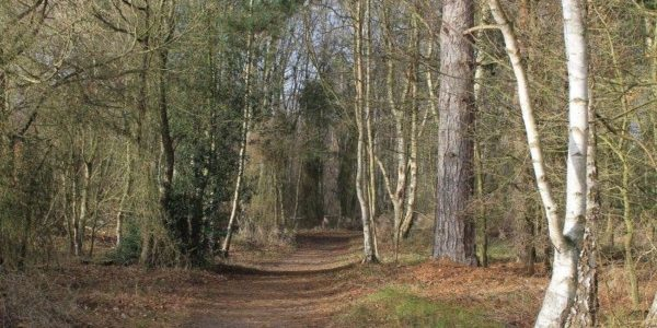 West Stow Forest