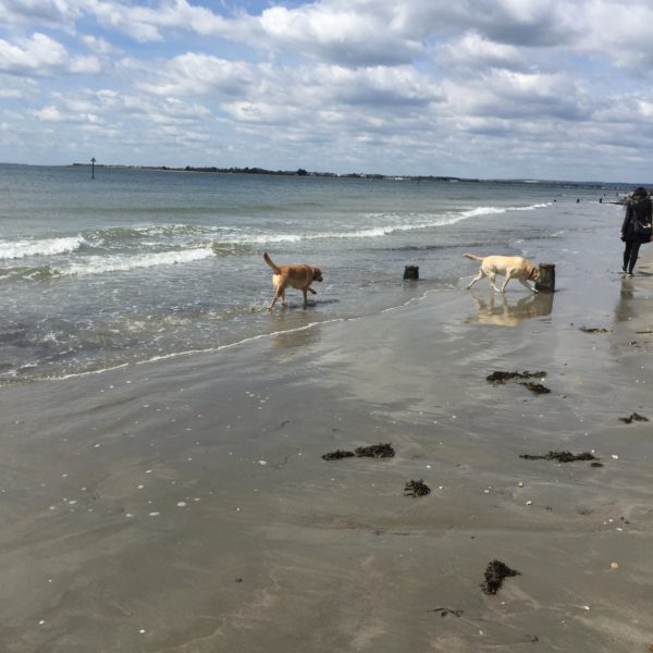 West Wittering photo 1