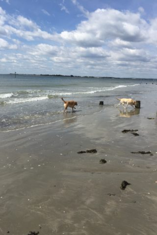 Dog walk at West Wittering photo