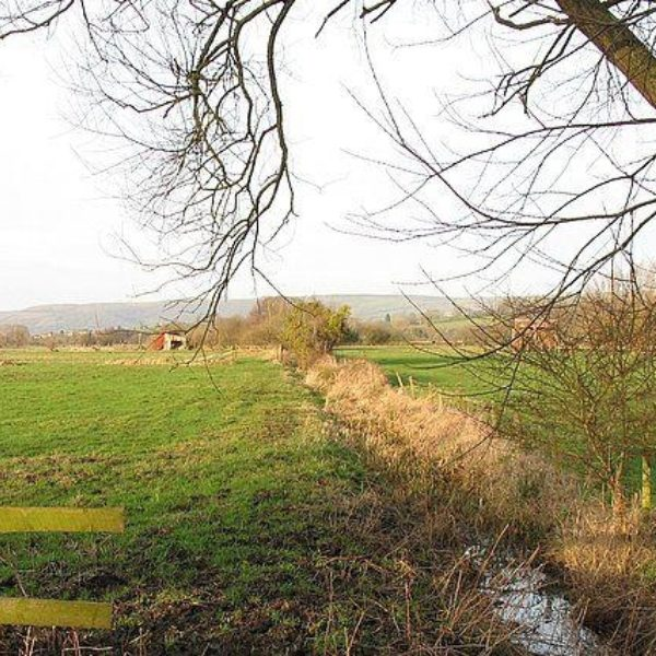Westhay Nature Reserve photo 3