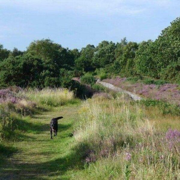Westleton Heath photo 2