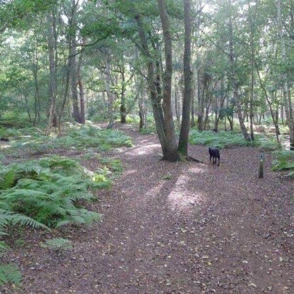 Westleton Heath photo 3