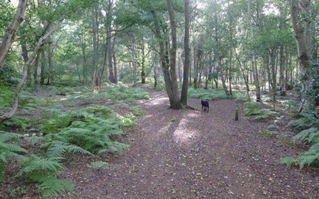 Westleton Heath Dog walk in Suffolk
