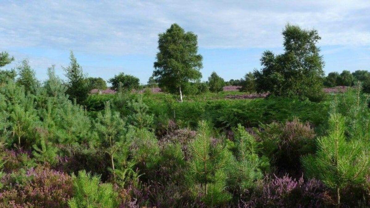 Westleton Heath large photo 4