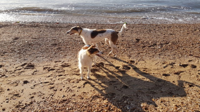 Dog walk at Weston Shore