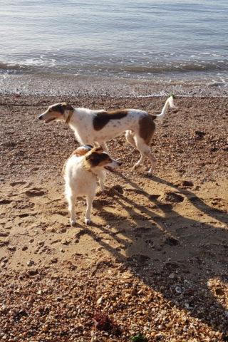 Dog walk at Weston Shore photo