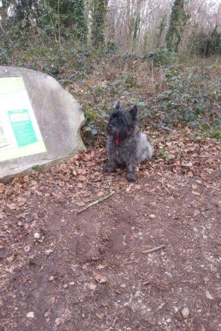 Dog walk at Weston Woods photo