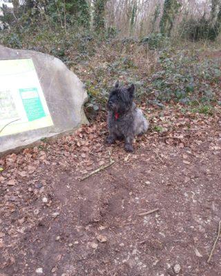 Dog walk at Weston Woods