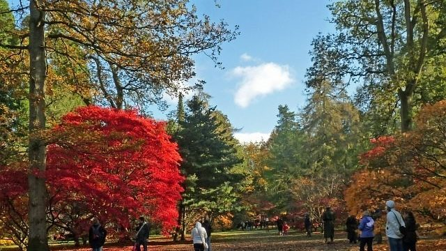 Dog walk at Westonbirt Arboretum