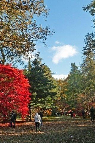 Dog walk at Westonbirt Arboretum photo