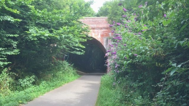 Dog walk at Weymouth To Portland Rodwell Trail