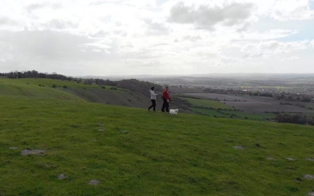 White Horse Park - Westbury Dog walk in Wiltshire
