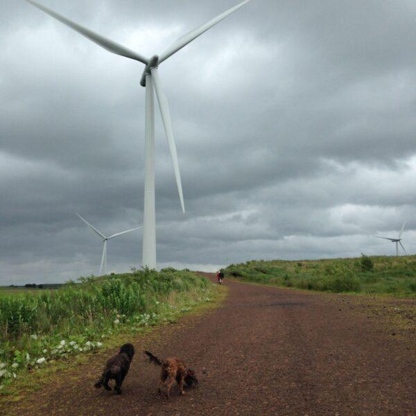 Whitelee Wind Farm photo 3