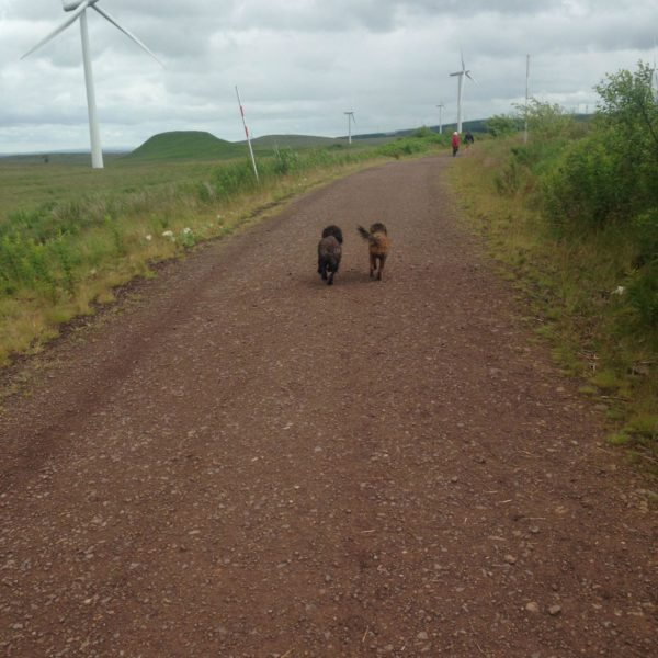 Whitelee Wind Farm photo 7