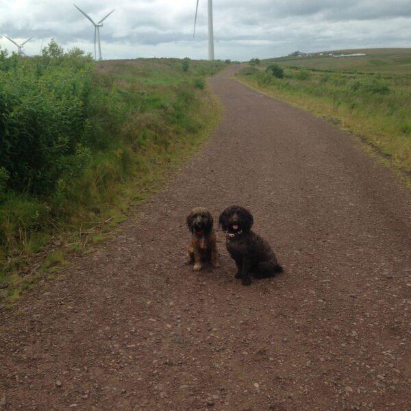 Whitelee Wind Farm photo 8