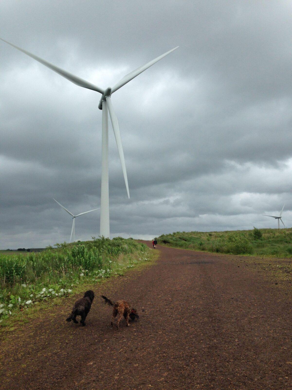 Whitelee Wind Farm large photo 3