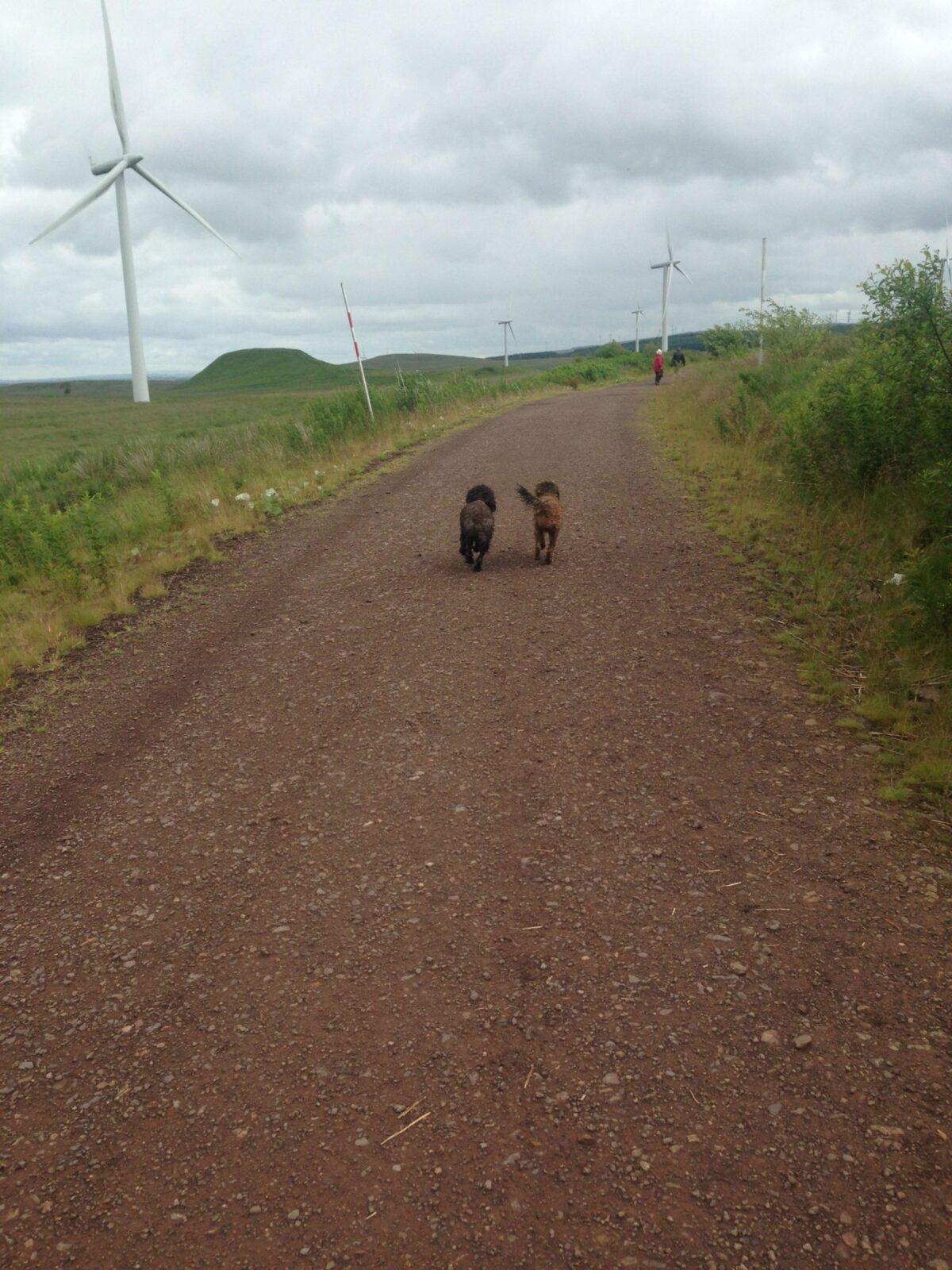 Whitelee Wind Farm large photo 7
