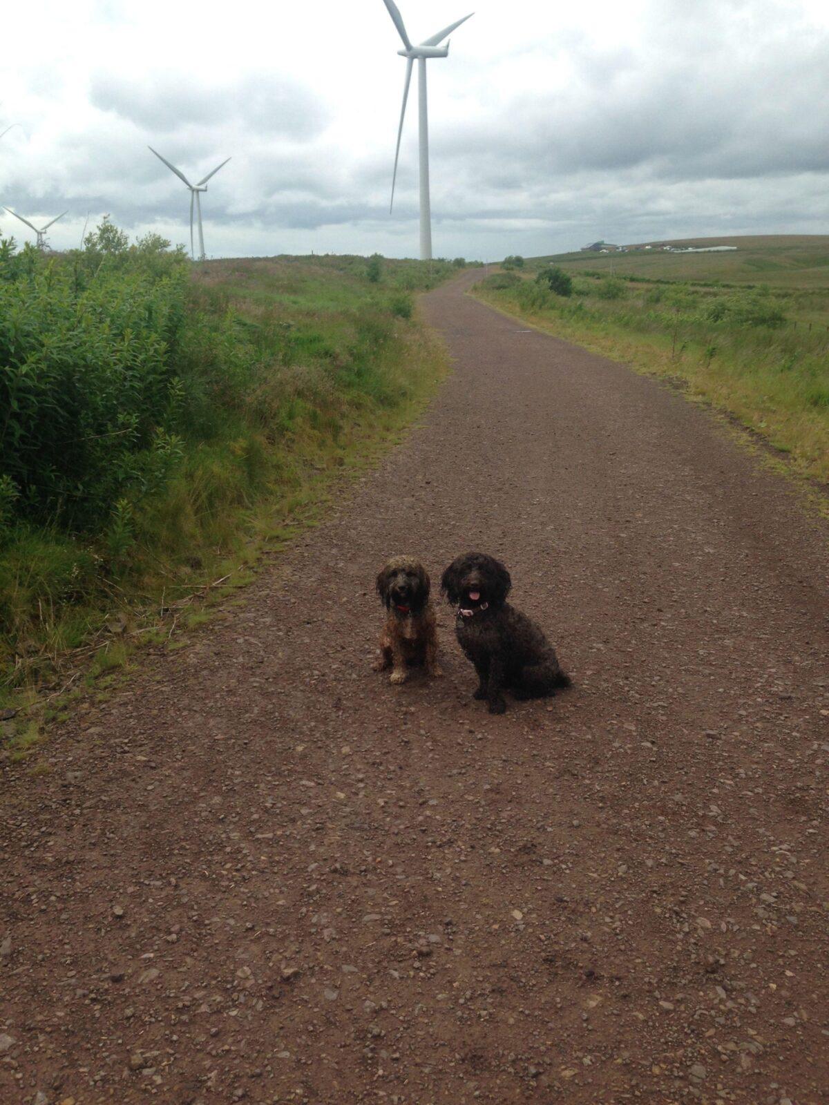 Whitelee Wind Farm large photo 8