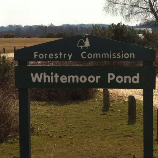 Whitemoor Pond photo 1