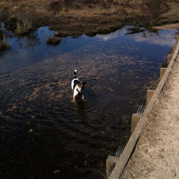 Whitemoor Pond photo 13
