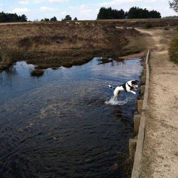 Whitemoor Pond photo 14