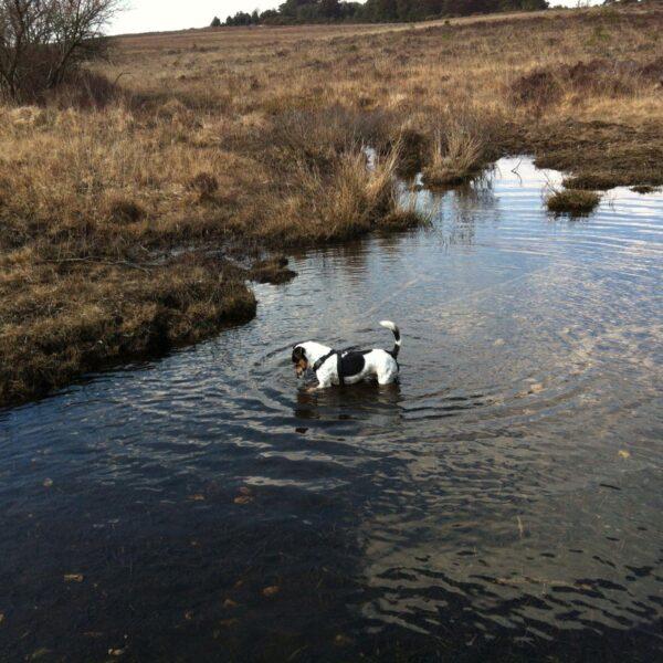 Whitemoor Pond photo 15