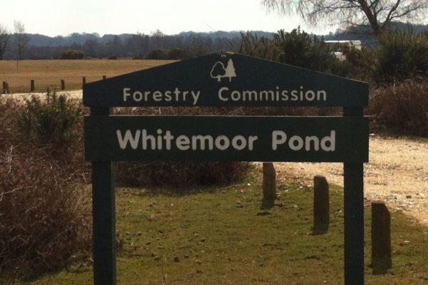 Whitemoor Pondphoto