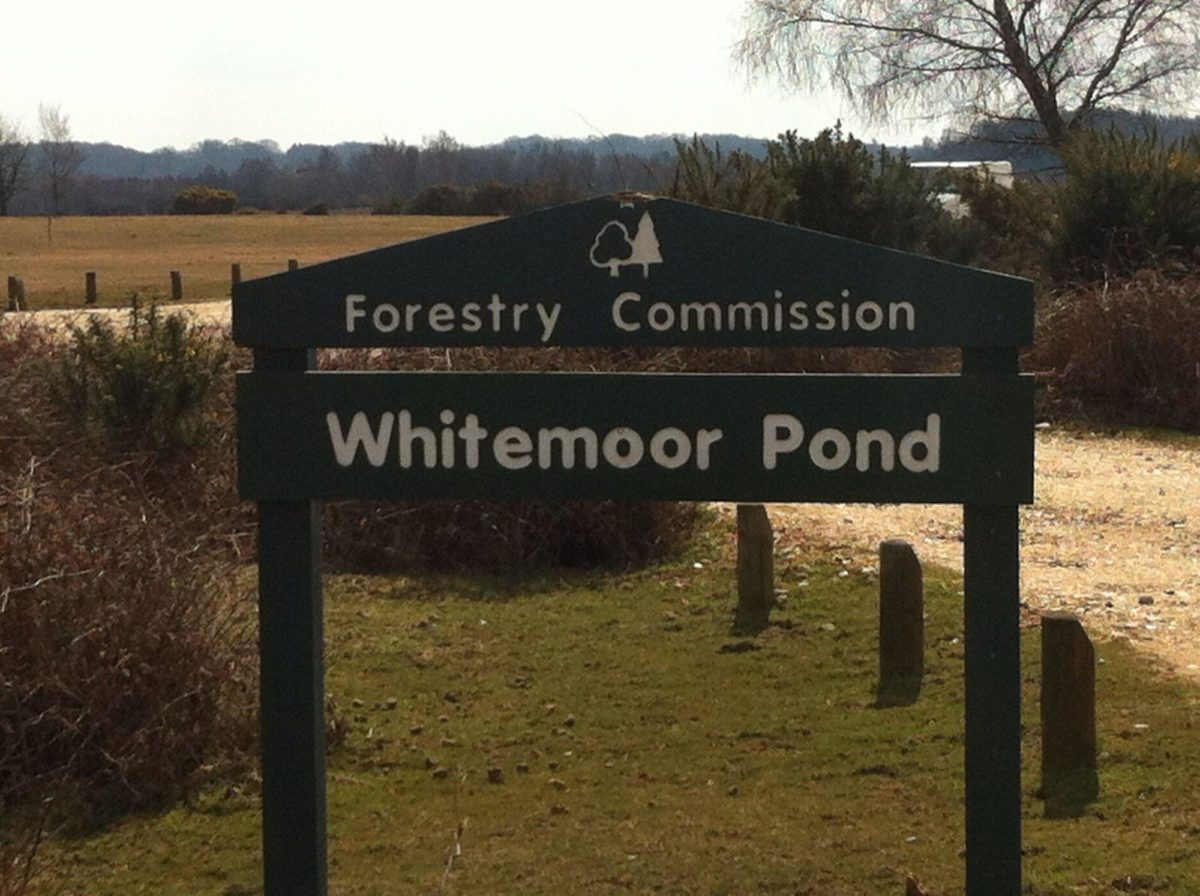 Whitemoor Pond large photo 1