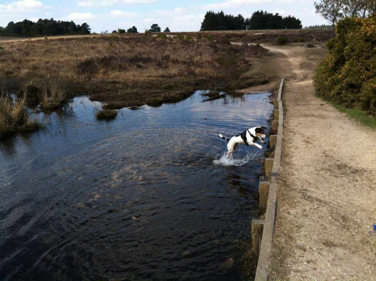 Whitemoor Pond large photo 14