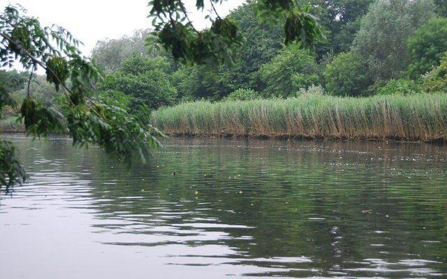 Whitlingham Lake Dog walk in Norfolk