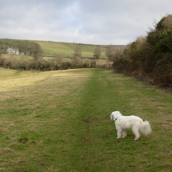 Dog walk at Whitwell/st Lawrence/niton/whitwell