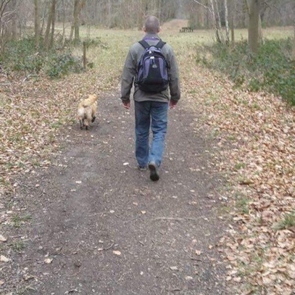 Dog walk at Whitwell Wood