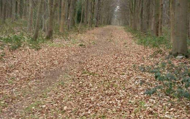Whitwell Wood Dog walk in Derbyshire