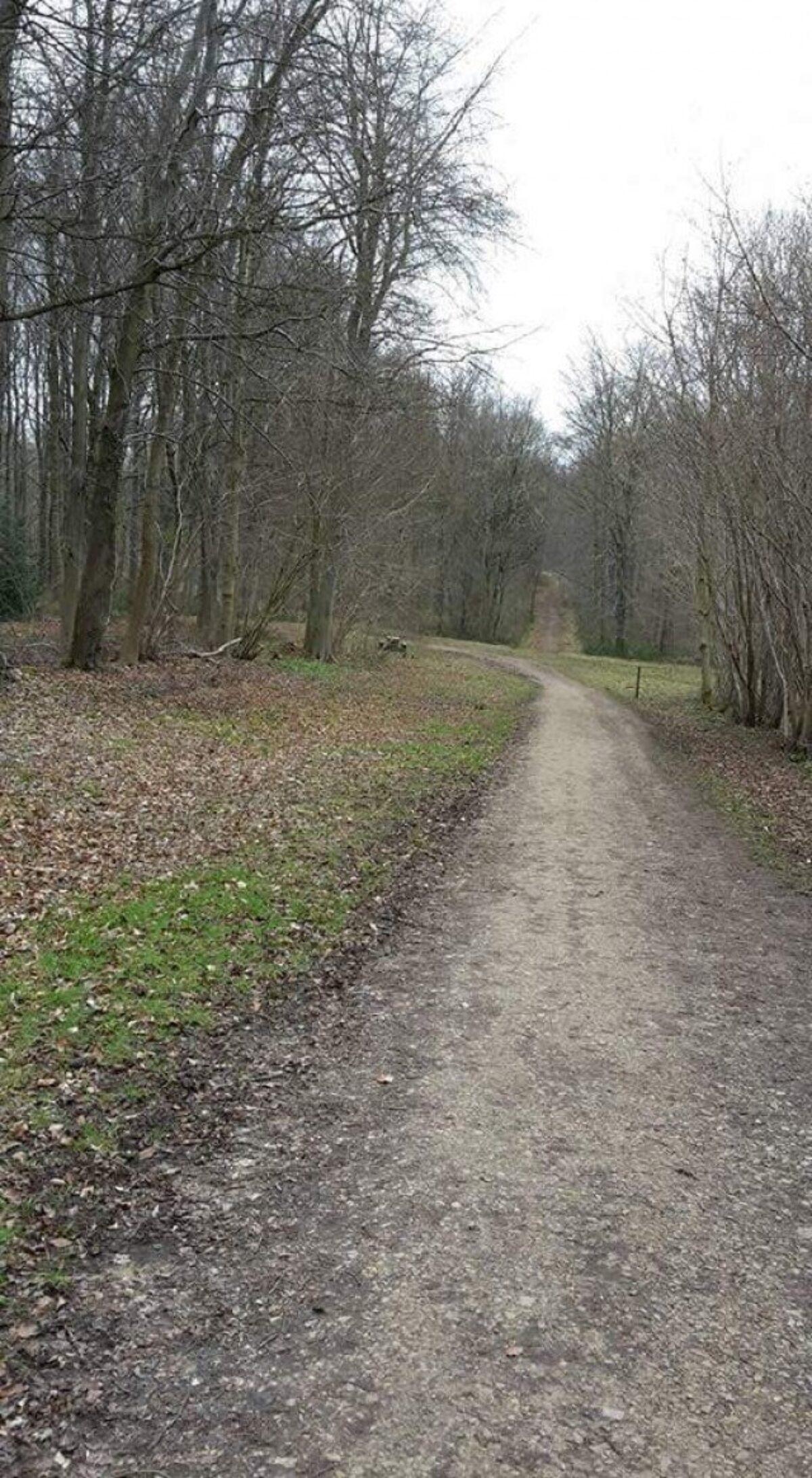 Whitwell Wood large photo 5