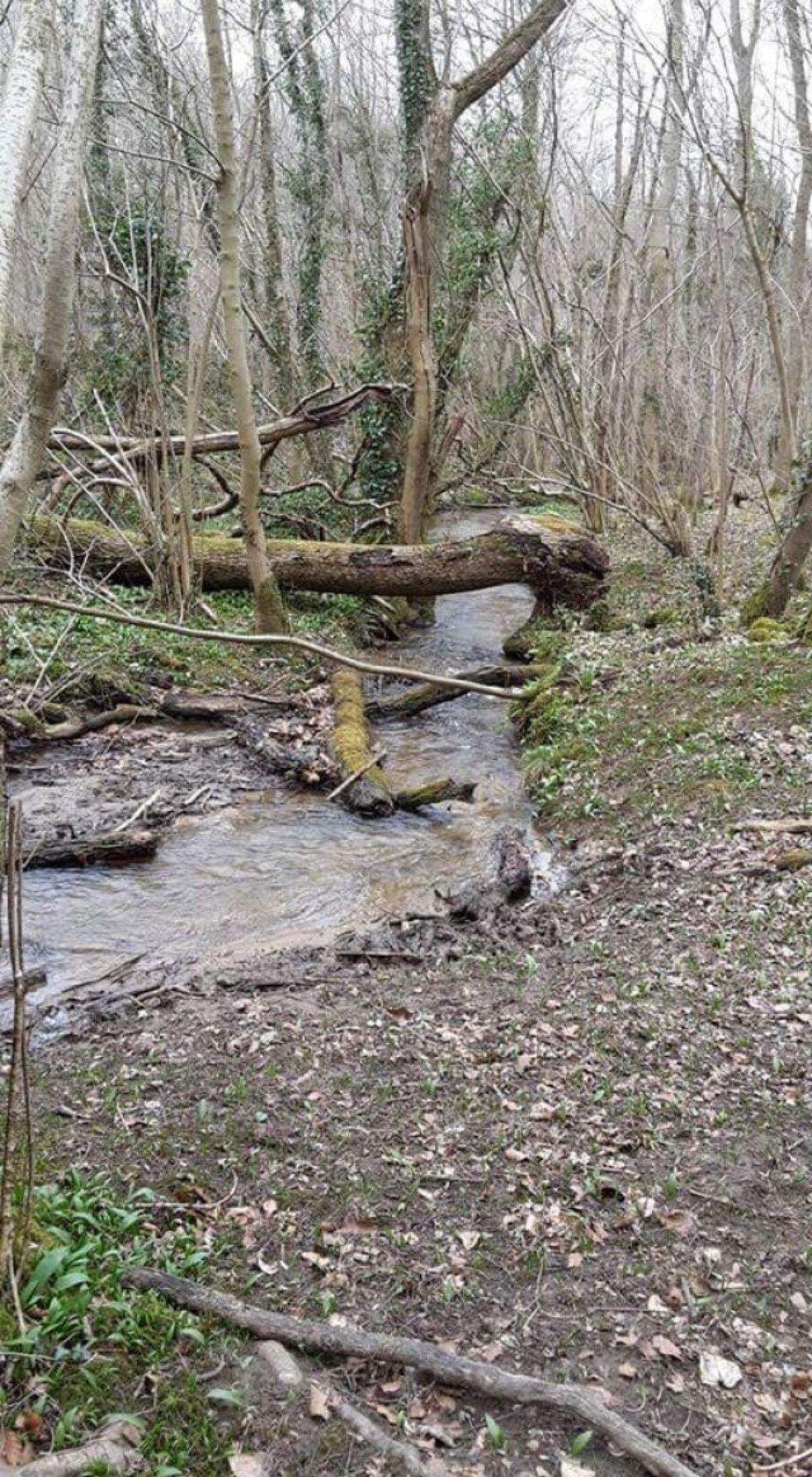 Whitwell Wood large photo 7