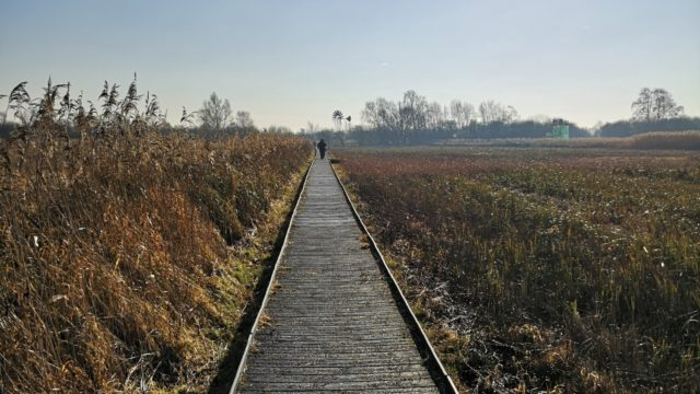 Dog walk at Wicken Fen