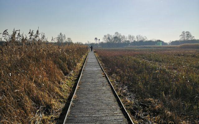 Wicken Fen Dog walk in Cambridgeshire