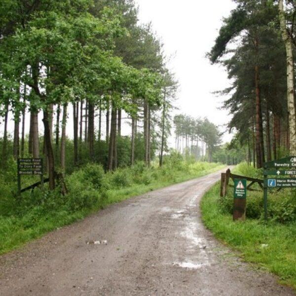 Willingham Woods photo 1
