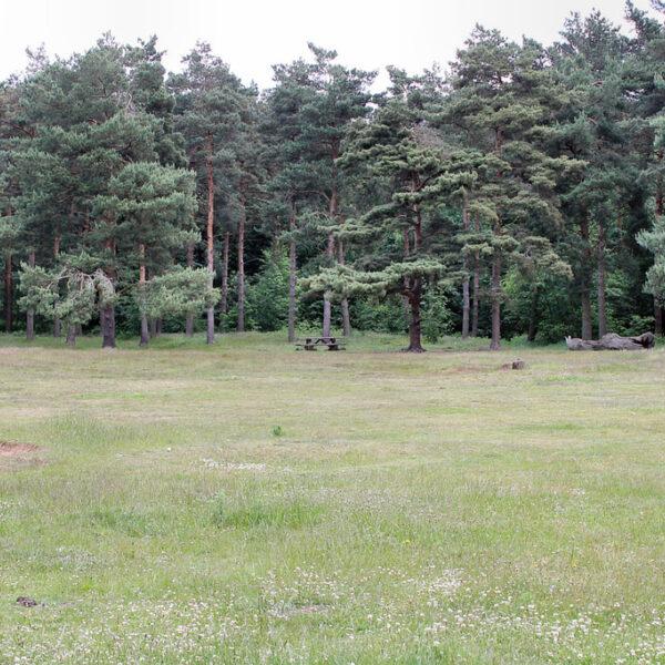 Willingham Woods photo 4