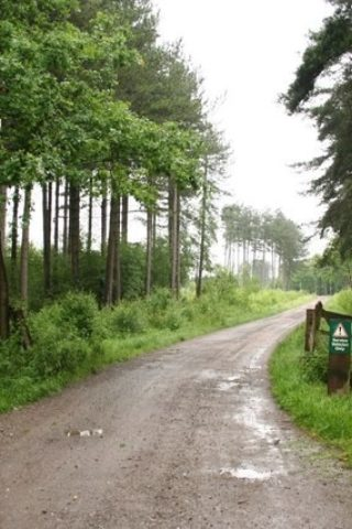 Dog walk at Willingham Woods photo