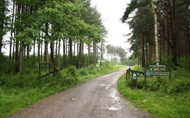 Willingham Woods Dog walk in Lincolnshire