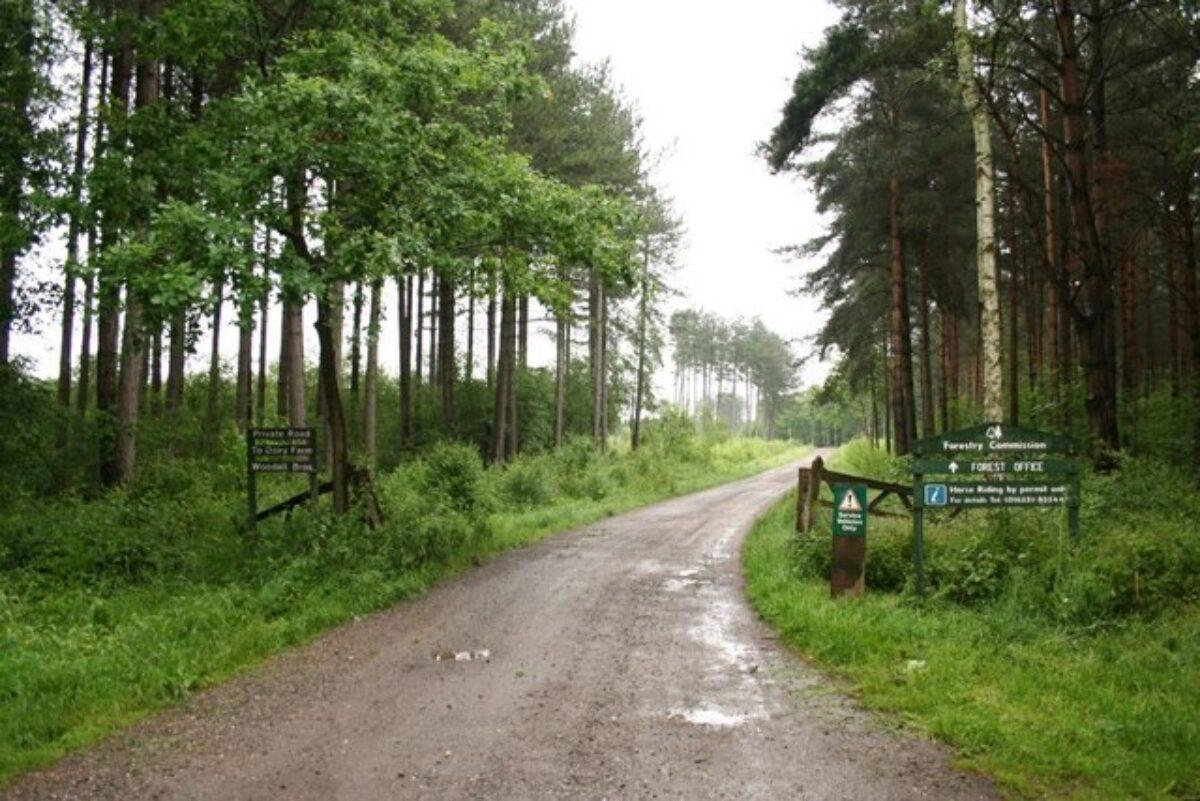 Willingham Woods large photo 1