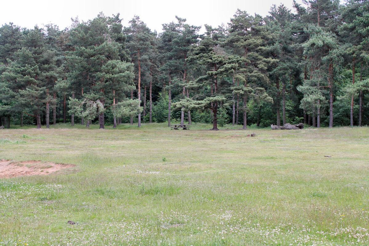 Willingham Woods large photo 4