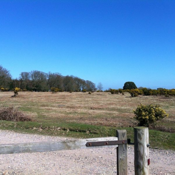 Wilverley Enclosure And Wilverley Plain photo 15