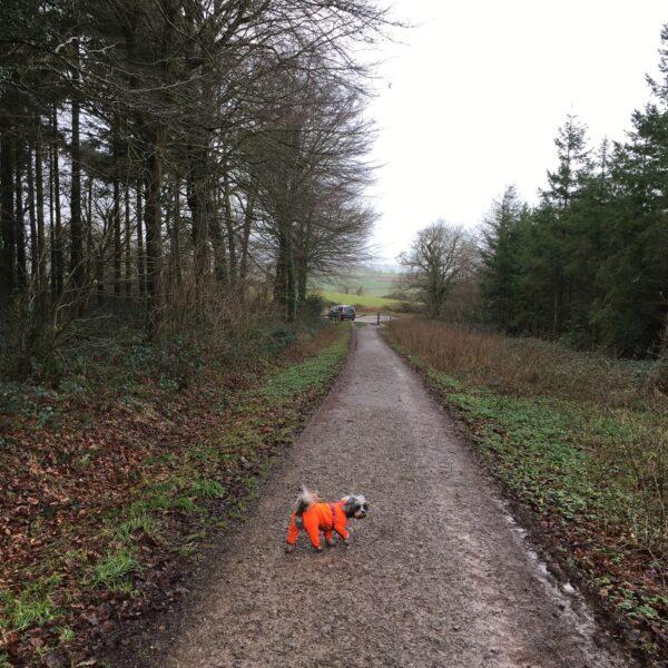 Dog walk at Wind Down