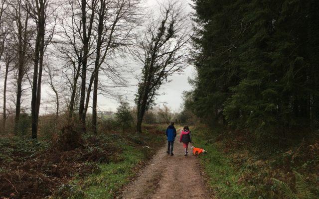 Wind Down Dog walk in Somerset