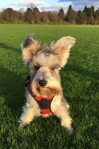 Dog walk at Windsor Great Park photo